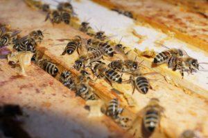 Bienen im Staat - © by bienengeschenke.de